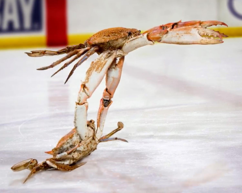 Old Bay- Social Crab